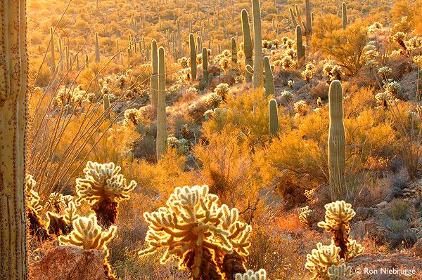 Stephen G Kobourov Things to do in and around Tucson AZ